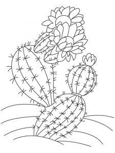 raskraski-cvety-kaktus-12
