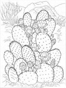 raskraski-cvety-kaktus-2