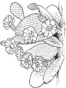 raskraski-cvety-kaktus-8