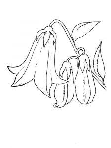 raskraski-cvety-kolokolchik-12