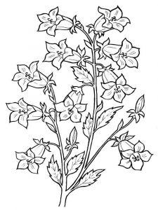 raskraski-cvety-kolokolchik-3