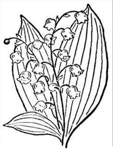 raskraski-cvety-landish-5