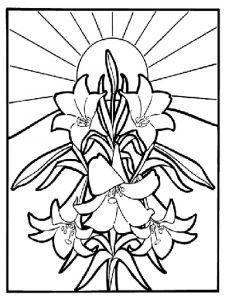 raskraski-cvety-lilija-1