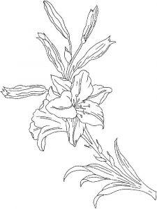 raskraski-cvety-lilija-10