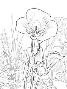 raskraski-cvety-lilija-12