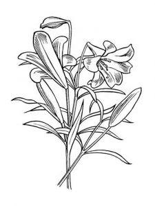 raskraski-cvety-lilija-13