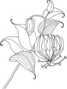 raskraski-cvety-lilija-7