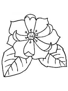 raskraski-cvety-magnolia-11