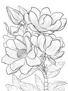 raskraski-cvety-magnolia-2