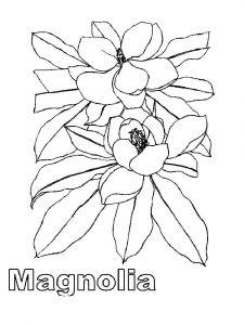 raskraski-cvety-magnolia-6