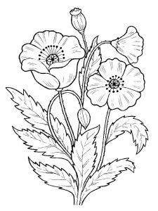 raskraski-cvety-mak-1