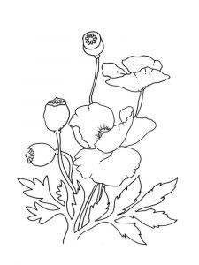 raskraski-cvety-mak-10