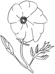 raskraski-cvety-mak-12