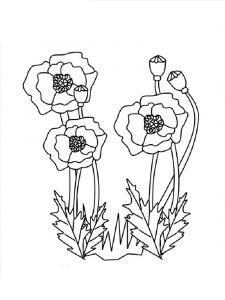 raskraski-cvety-mak-15