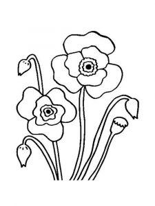 raskraski-cvety-mak-6