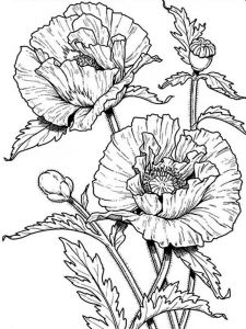 raskraski-cvety-mak-8