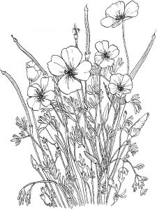 raskraski-cvety-mak-9