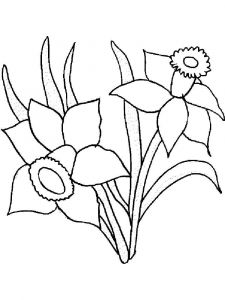 raskraski-cvety-narciss-11