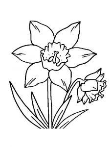 raskraski-cvety-narciss-14