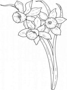 raskraski-cvety-narciss-3