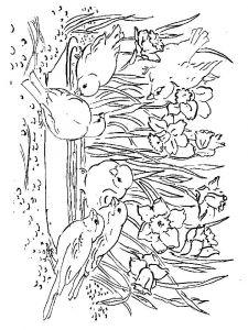 raskraski-cvety-narciss-6
