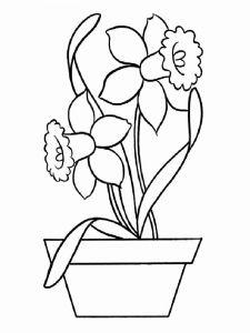 raskraski-cvety-narciss-7