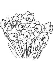 raskraski-cvety-narciss-9