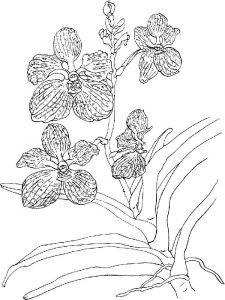 raskraski-cvety-orhideja-16