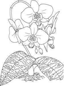 raskraski-cvety-orhideja-3