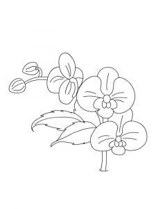raskraski-cvety-orhideja-5
