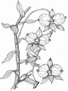 raskraski-cvety-orhideja-8