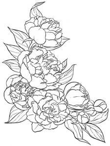 raskraski-cvety-pion-1