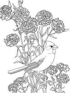 raskraski-cvety-pion-13