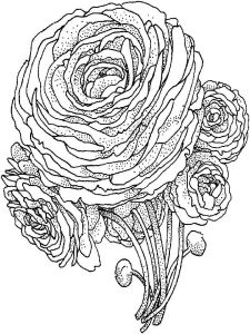 raskraski-cvety-pion-8