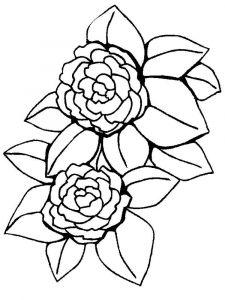 raskraski-cvety-pion-9