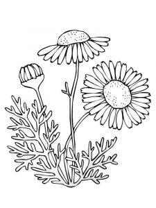 raskraski-cvety-romashki-10