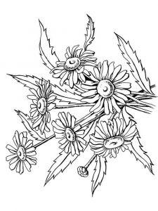 raskraski-cvety-romashki-18