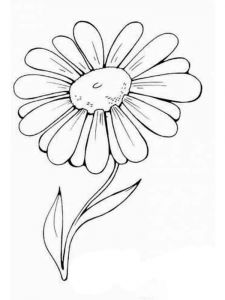 raskraski-cvety-romashki-4