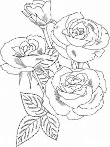 raskraski-cvety-rose-1