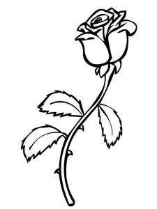 raskraski-cvety-rose-18