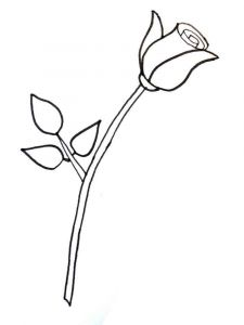 raskraski-cvety-rose-2