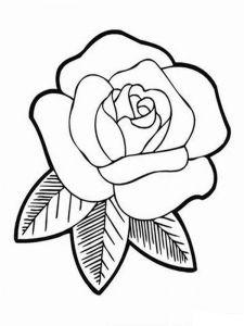 raskraski-cvety-rose-4