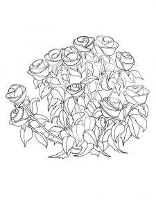 raskraski-cvety-rose-8