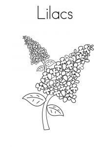 raskraski-cvety-siren-6
