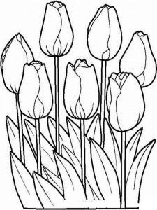 raskraski-cvety-tulpan-12