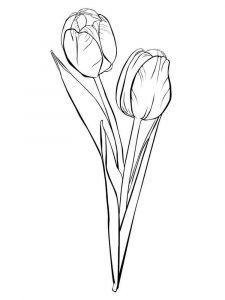 raskraski-cvety-tulpan-16