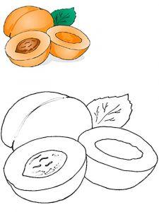 raskraski-frukty-abrikos-1