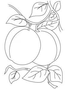 raskraski-frukty-abrikos-10