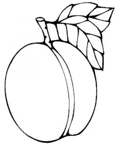 raskraski-frukty-abrikos-5