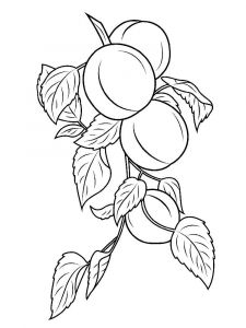 raskraski-frukty-abrikos-7